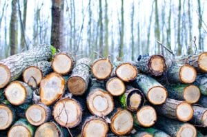 Tree recycling, debris and waste removal ideas