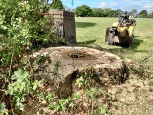 Stump Grinding & Tree Stump Removal 2